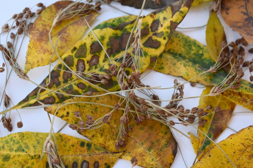 mabon-autumn-leaves-closeup