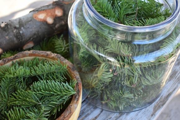 pine-harvesting-open-jar